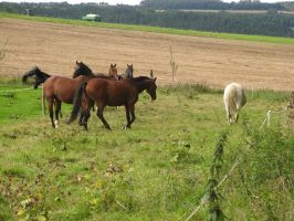 Horses Collection: Grouped 2 by Germanstock