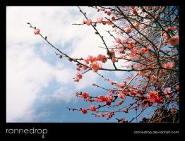 Plum Blossoms In The Sky by rannedrop