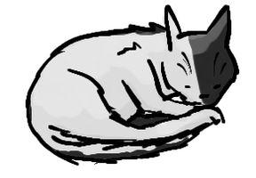 Black and White Cat by frisbii
