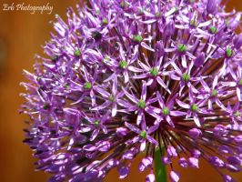 Spring Flower Series I by erbphotography