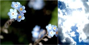 Forget Me Not Sky by stuk-in-reality