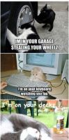Funny Cat Pictures by InvaderEma