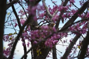 A Robin sits as spring brings new life... by ddude003