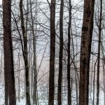Pastels Through the Trees by sharktankfan