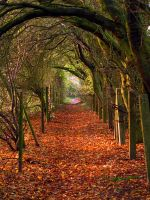 A Path In Autumn by Its-Only-Art
