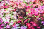 Stop and smell the flowers... by klapouch