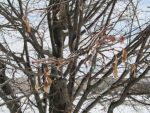 After the Ice Storm 9 by Windthin