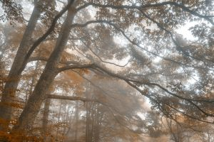 Misty Forest Branchscape - Sepia Euphoria by somadjinn