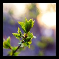 Spring by Zx20