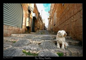 The Alley Poodle by Aderet