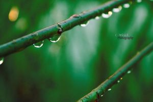 goodbye rain by CaryM