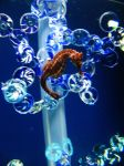 SeaHorse 2 -- Sept 2009 by pricecw-stock