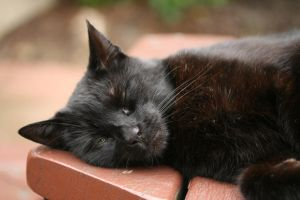 Lazy Black Cat by RaeyenIrael-Stock