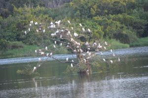 Birds on the Water by TaleSmith