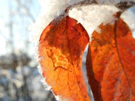 Frozen amber by Phenri