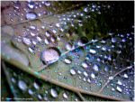. Water drops . by KimikoTakeshita