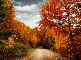 road of leaves by annwn13