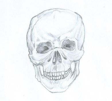 Skull study by Malaurielle