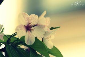spring. by MartinaPhotography