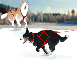European Mastership Skijoring 2014 entry by Fountain-Rock-Kennel
