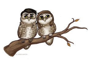 owls are pretty cool by Jackarais