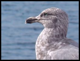 Gull by AmyMaeFeely