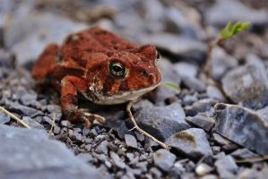 The Tiny Toad by KStyer