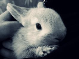 the bunny. by Ritiinhaa