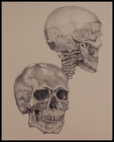 Anatomy : the human skull by tberardi