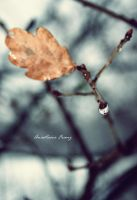 A tear of a tree. by Eanchen