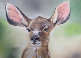The nyala with giant ears by Domenique2