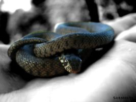 Grass Snake III by Sombrelys