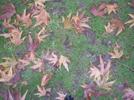 SOU Leaves 3 by wilterdrose-stock