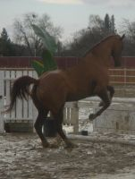 Jumping -tackless- 1 by rachellafranchistock