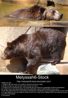 Bear Stock 5 by Melyssah6-Stock