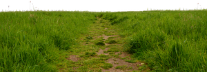 Grass Path 1 by MindSqueeZe