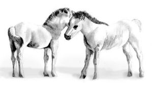 Foals by ficus