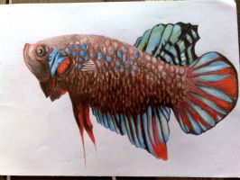 betta fish by redcolour