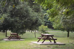 Benches and Trees by tangeloskye