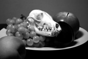 Still life with Skull by CindarellaPop