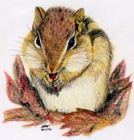 Chipmunk by burberry