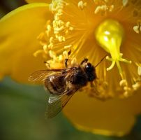 Bee of flower by BlonderMoment