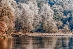 Silver Tree's by keithcullis