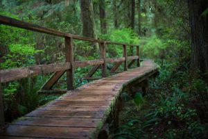Rainforest Walkway by leeorr-stock