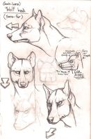 Wolf anatomy furless heads by Anarchpeace