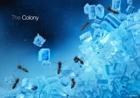 The Colony by minlie