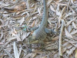 Reptiles by Rosabella23