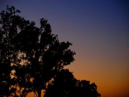 Gumtree sunset by angusfk