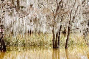 Spanish In the Swamp by dellamort