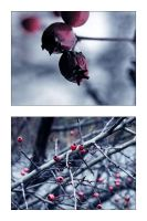 .winter's beads by NoirFeu